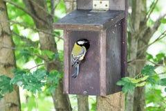 Oiseau vert Photo stock
