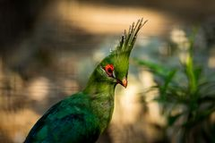 Oiseau vert avec de belles plumes Photographie stock