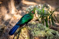 Oiseau vert avec de belles plumes Image libre de droits