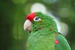 Oiseau vert d'amour Image libre de droits