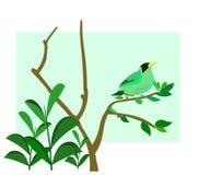Oiseau vert de fond sur un branchement Image stock