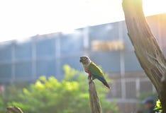 Oiseau vert sur l'arbre photo stock
