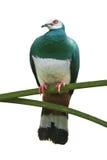 Oiseau vert sur le branchement Photos libres de droits
