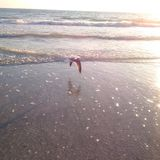 Oiseau volant au-dessus de l'océan pour exposer au soleil l'ensemble image stock