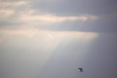 Oiseau volant au-dessus des rayons de Sun Images libres de droits