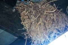 Oiseaux à la maison d'emboîtement photos libres de droits