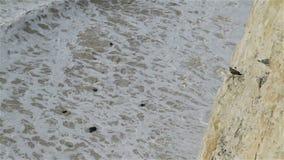 Oiseaux à sept falaises de soeurs dans le Sussex est clips vidéos