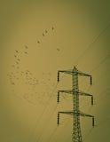 Oiseaux électriques de noir de poteau Image libre de droits