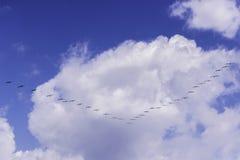 Oiseaux émigrant Images stock