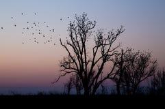 Oiseaux étés perché dans les arbres Photo libre de droits