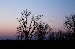 Oiseaux étés perché dans les arbres Image stock