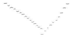 oiseaux étant executé Photos libres de droits