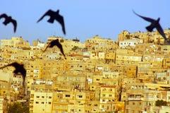 Oiseaux étranges Photos libres de droits