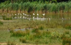 Oiseaux 1 Photo stock