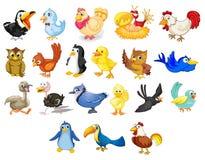 Oiseaux Photographie stock