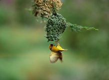 Oiseaux Image libre de droits