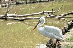 Oiseaux Photos libres de droits