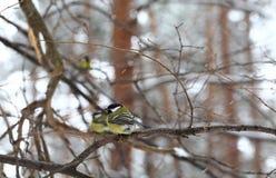 oiseaux Images libres de droits