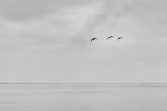 3 oiseaux Photo libre de droits