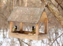 Oiseaux alimentant en hiver Photos stock