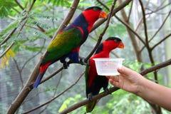 Oiseaux alimentants Images libres de droits