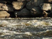 Oiseaux aquatiques dans la lumière de matin images libres de droits