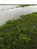 Oiseaux aquatiques de lac Images libres de droits