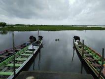 Oiseaux aquatiques de lac Image libre de droits