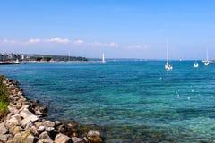 Oiseaux aquatiques et bord de mer à la ville de Genève Image stock