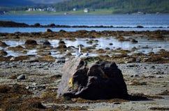 Oiseaux arctiques de sterne débarquant sur le bord de mer Image libre de droits