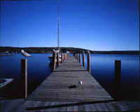 Oiseaux attendant dans la ligne, New Hampshire Image stock