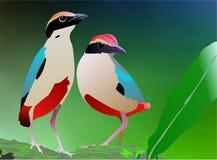 Oiseaux attrapant la nourriture Photo libre de droits
