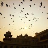 Oiseaux au-dessus de palais Images libres de droits