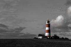 Oiseaux au-dessus du phare Image stock