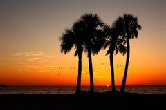 Oiseaux au lever de soleil Photo libre de droits