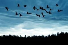 Oiseaux au lever de soleil ou au coucher du soleil Photos libres de droits