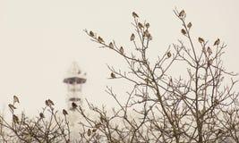 Oiseaux au printemps devant la tour Photographie stock