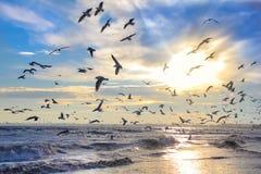 Oiseaux au soleil contre le ciel et la mer Image stock