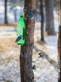 Oiseaux au sujet d'une cuvette d'alimentation. Image stock
