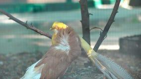 Oiseaux au zoo banque de vidéos