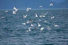 Oiseaux autour d'une baleine Photographie stock