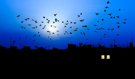 Oiseaux avec la pleine lune au-dessus des dessus de toit de ville Photographie stock libre de droits
