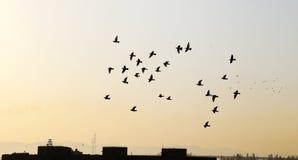Oiseaux avec le coucher du soleil Photographie stock libre de droits