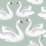 Oiseaux blancs dans le modèle sans couture d'amour Fond de faune Swimm Photographie stock libre de droits