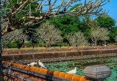 Oiseaux blancs de colombe par le lac d'entrée de citadelle de Hue image libre de droits
