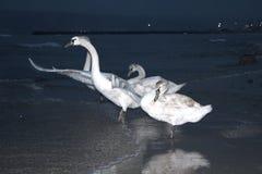 Oiseaux blancs en mer de nuit Images libres de droits