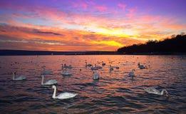 Oiseaux blancs le long de bord de la mer de coucher du soleil Image stock