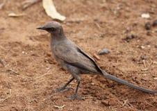 Oiseaux colorés africains Photo stock
