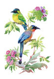 Oiseaux colorés d'aquarelle illustration stock