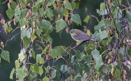 Oiseaux colorés entre les feuilles d'un arbre Photographie stock